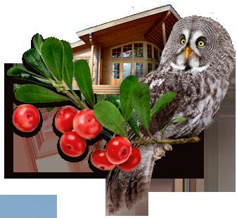 Villi Lappi - elamus- ja loodusteenindusi